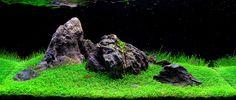 Créer un aquarium Iwagumi Aquarium Landscape, Nature Aquarium, Planted Aquarium, Nano Aquarium, Aquarium Design, Aquarium Fish, Aquarium Ideas, Aquascaping, Indoor Pond
