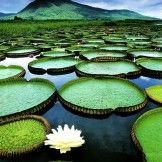 So Amazing Pantanal Conservation Area -Brazil