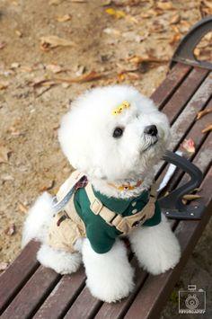 또롱 #lovepet #dogs #dogphotography #pet #petphotography #pupp #petography #dogfashion #강아지 #강아지사진 #반려동물 #반려동물촬영 #반려견촬영 #펫토그래피 #애견스냅 #애견스튜디오 #애견촬영 #애견사진 #애완동물촬영 #비숑프리제 #비숑 #bichon #bichonfrise