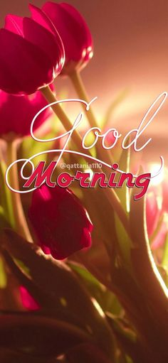 Latest good morning flower images and pic for brother, sister, friends and family. Share the morning greetings and make them Good Morning Beautiful Pictures, Good Morning Images Flowers, Good Morning Roses, Good Morning Image Quotes, Good Morning Gif, Good Morning Picture, Good Morning Messages, Morning Pictures, Morning Quotes