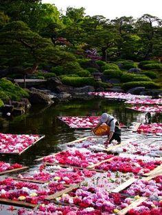 Flower rafts in japanese garden, Matsue, Shimane, Japan.