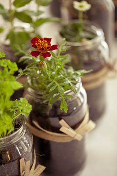 living plant in a jar.