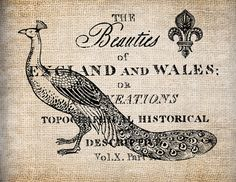 Antique Peacock England Fleur de Lis Ornate Illustration Digital Download for Tea Towels, Papercrafts, Transfer, Pillows, etc Burlap No 5367 via Etsy