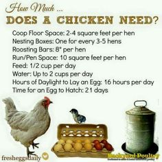 How much does a chicken need?