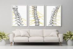 Chiropractic Office Decor, Chiropractic Clinic, Clinic Interior Design, Clinic Design, Medical Office Decor, Cool Office, Office Ideas, Office Artwork, Medical Art