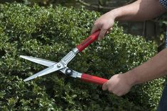Berger Tools Germany Topiary Shear *** You can find out more details at the link of the image. Shears Scissors, Shearing, Swiss Army Knife, Topiary, Outdoor Gardens, Germany, Tools, Canning, Link