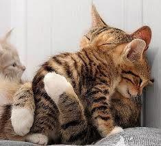 mama love #cats