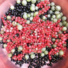 cuisinedemememoniq:  Suite aux récoltes gelée aux 3 baies :...
