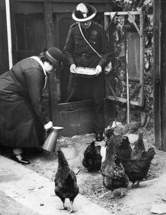 15th February 1940: ARP (Air Raid Precautions) wardens feeding some of the chickens that they keep at their post in the grounds of the vicarage of St Andrew's Church in Hackney. (Photo by George W. Hales/Fox Photos/Getty Images)
