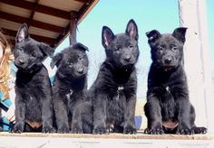 Ahh...So cute. I love how they look like wolves.