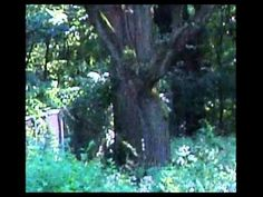 The Modaonna or Ghost Woman of Bachelors Grove Cemetery and Baby - YouTube