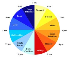 The Chinese Body Clock   Wellness MCUniverse