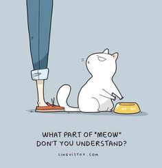 What part of meow do you not understand