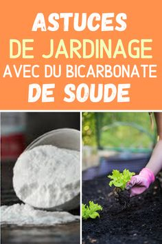 Apartment Garden, Horticulture, Garden, Chickens Backyard, Insecticide, Creative Gardening, Bonsai, Backyard Chicken Coop Plans, Gardening Tips