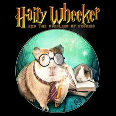 Making those veggies disappear as if it was by magic. Hairy Wheeker and the gobbling of veggies! Baby Guinea Pigs, Guinea Pig Care, Baby Pigs, Baby Bunnies, Funny Animal Jokes, Cute Funny Animals, Guinea Pig Quotes, Guine Pig, Harry Potter