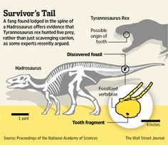 Fossil Proves T. Rex Wasn't Just a Scavenger