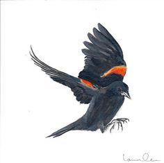 Red Winged Blackbird in flight by loren on Etsy, $35.00