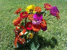 La flor más elegante de tu jardín: la Zinnia