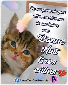 Belle Photo, Images, Messages, Cats, Facebook, Passion, Cute Pets, Living Alone, Jokes