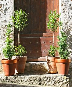 Sweet topiaries on both sides of the door (from a little shop in Southern France)
