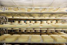 Repos du dimanche de nos cabécous et crottins dans les hâloirs de la fromagerie !