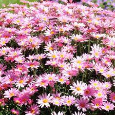 fleurs pour printemps ete