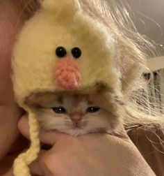 Cute Baby Cats, Cute Little Animals, Cute Funny Animals, Kittens Cutest, Cats And Kittens, Cute Babies, Cats In Hats, Cute Animal Photos, Funny Animal Pictures
