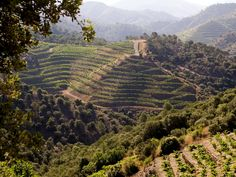 Sola Classic, living proof that fine-wine from priorat can be yours without breaking the bank Places Around The World, Around The Worlds, Wine Images, Organic Wine, Barcelona, The Province, Science Nature, Vineyard, Beautiful Places