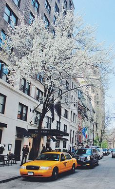 // nyc in the spring
