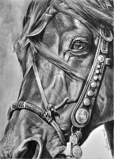 Maria D'Angelo Fine Art In Pencil - Enduring Spirit