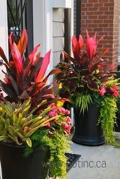 Bright colorful garden pots Red and chartreuse Summer 2012 contemporary landscape Todd Holloway Colorful Garden, Tropical Garden, Tropical Flowers, Tropical Plants, Container Flowers, Container Plants, Container Gardening, Patio Plants, Outdoor Planters