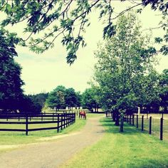 Country Horse Paddock.