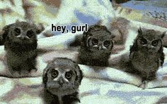 Funny pictures about Owl quartet. Oh, and cool pics about Owl quartet. Also, Owl quartet photos. Animals And Pets, Baby Animals, Funny Animals, Cute Animals, Beautiful Owl, Animals Beautiful, Cute Creatures, Beautiful Creatures, Tier Fotos