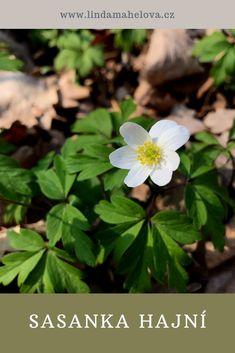 Herbs, Garden, Plants, Honey, Garten, Lawn And Garden, Herb, Gardens, Plant