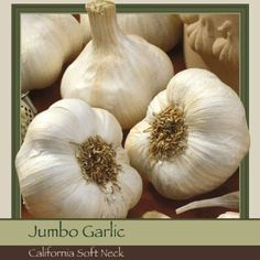 Garlic is such an easy crop to grow! Learn all about growing, storing, and harvesting garlic. Plus, uses for garlic in the kitchen & for medicinal purposes!
