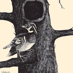 """Wood Duck With A View""   Pen & Ink Print   ArtByLatiolais.com"