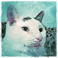 Happy Gotcha Day to my sweet Okey! Five years ago I rescued her from the Okey Law Firm parking lot in downtown Canton and she has come so far since then. :) #Okey #gotchaday #happygotchaday #catsofinstagram #catart #custompetportrait #digitalart #iphonegraphy #bztatart