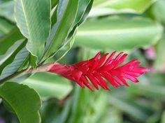 Faune et Flore tropicale  thaïlande   Diaporama Une nature très exotique, et diaporamas photos