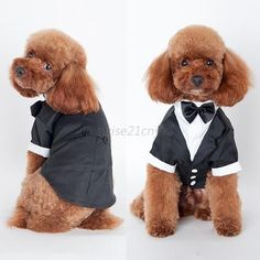 Small Pet Dog Cat Clothing Prince Wedding Suit Tuxedo Bow Tie Puppy Clothes Coat #Unbranded