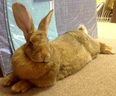 Bobby The Bunny Hop Bunny