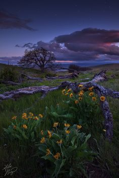 https://flic.kr/p/ewqvn8 | Dalles Mountain Twilight | Twilight falls over the spring wildflowers of Dalles Mountain Ranch in Washington.