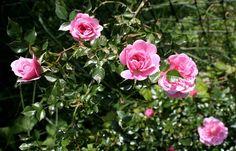 We hold a full and varied range of perennials suitable for sun, shade, damp or dry.  http://gardenseason.com/secret-garden-perennial-flowers/