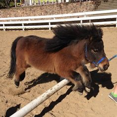 """7. """"I can scale a fence as good as any show pony!"""""""