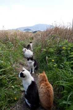 Country Cats I would follow this trail forever. It would be better than Pokemon hunting!