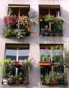 paris flower boxes