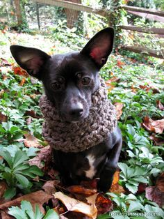 The Curious Pug: If you give a dog a cowl. Free crochet pattern.