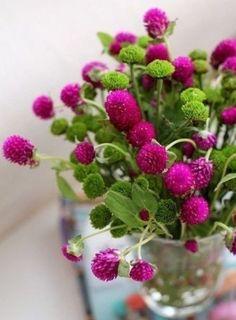 Summer Flowers, My Flower, Fresh Flowers, Pink Flowers, Beautiful Flowers, Globe Amaranth, Table Flowers, Magenta, Bunt