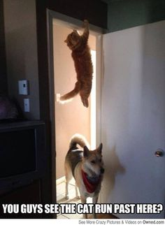 Cat's been watching Mission Impossible again