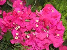 Flowers in Jardin Majorelle