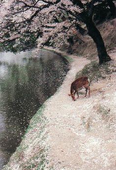 奈良 鹿のいる風景(山口勇) | IMA ONLINE
